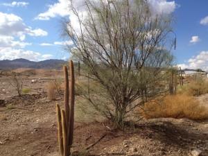 29 cactus 1