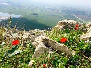 Flowers from rocks