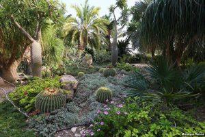 Kibbutz Ein Gedi Garden