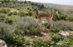 Neot Kdumin Biblical garden and Nature Preserve