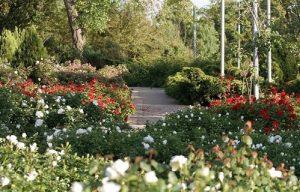 Wohl Rose Garden, Jerusalem